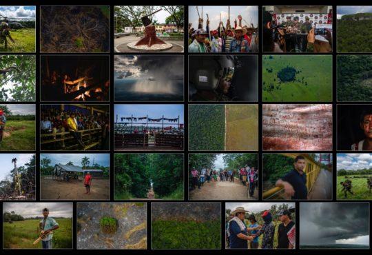 Deforestación: las heridas abiertas en el suroriente de Colombia