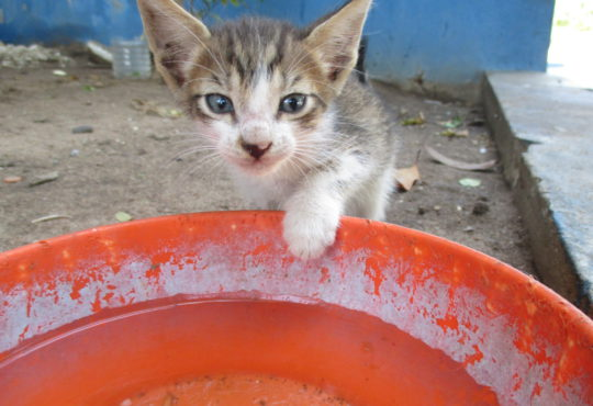 ¡Miau!… ¡Déjate tocar el corazón!