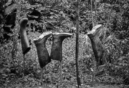 La sustitución de cultivos genera discordia y muerte en Putumayo