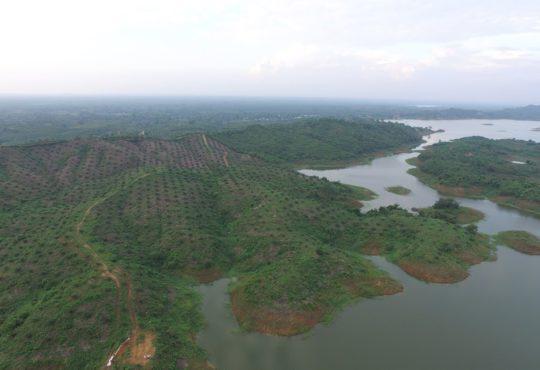De la yuca a la palma: Cambio del uso del suelo en Montes de María.